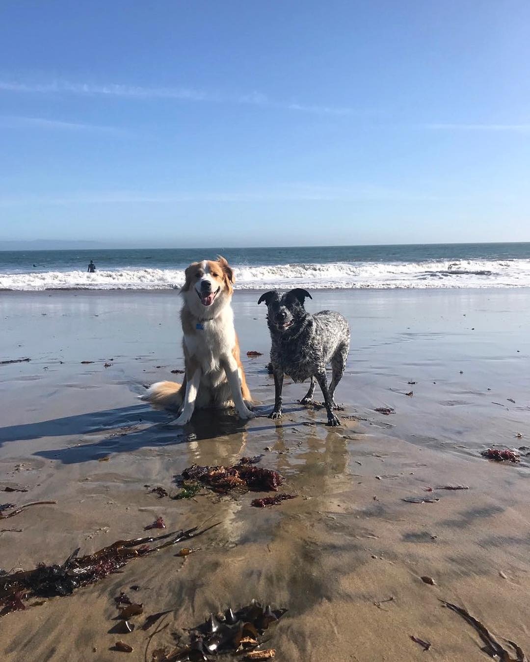 maggs and lola at the beach